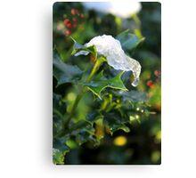 Holly leaf, snow, berries Canvas Print