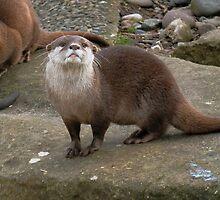 Otter by JenniferLouise