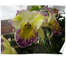 Bleeding Purple Orchid Poster