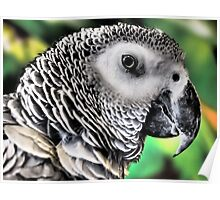 Feathered Friend Poster