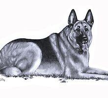 German Shepherd by Kobie Notting