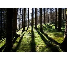Backlit forest Photographic Print
