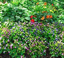 Bursting at the seams summer garden by MarianBendeth