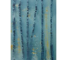 Blue Birch Trees Photographic Print