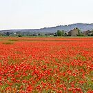 Poppies a field Southern France by KSKphotography