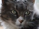 Rinnie, Up Close by Barry Doherty