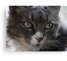 Rinnie, Up Close Canvas Print