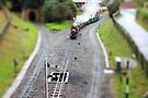 Moors Valley Steam Railway in tilt shift by missmoneypenny
