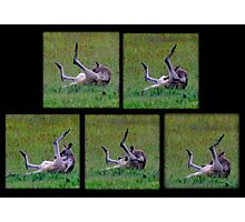 What ARE you doing Skippy Photographic Print