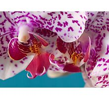 Phalaenopsis Orchid, tropical orchid macro Photographic Print