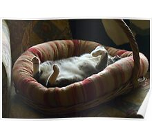 I think she is relaxed! Poster