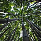 Bamboo sky by bamorris