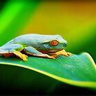 Tree Frog by Tracie Louise