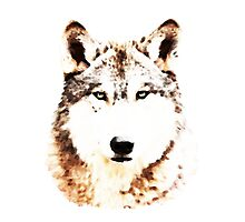 Green Eyed Wolf Photographic Print
