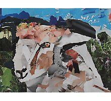 Sheepish Collage Photographic Print