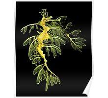 The Leafy Sea Dragon Poster