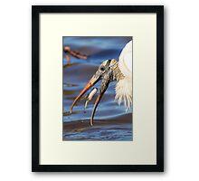 Nice Catch - Wood Stork Framed Print