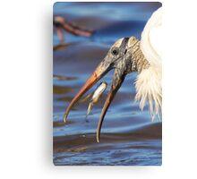 Nice Catch - Wood Stork Canvas Print
