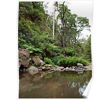 Otways waterfalls Victoria Poster