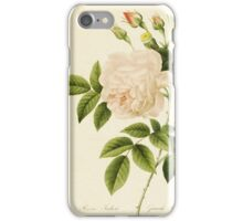 Rosa Indica or Cyme Rose by P.J. Redoute iPhone Case/Skin