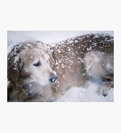 Snow dog  Photographic Print
