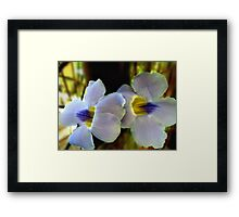 Blushing with pride... Framed Print