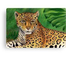 Jaguar (Panthera onca) Canvas Print