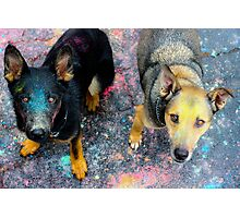 Pooch Party Photographic Print