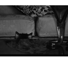 shy moggy Photographic Print