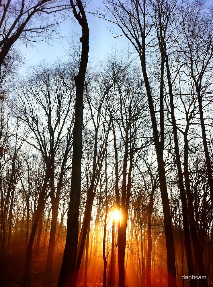 Morning Rays by daphsam