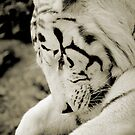 the white tiger I by Leny L.
