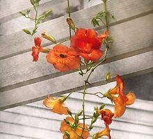 Flower - Trumpet melodies by Mike  Savad