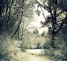 Winter Walk by ©The Creative  Minds