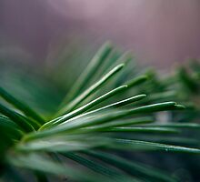 Pine Needle Swirl by William Martin