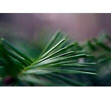 Pine Needle Swirl Photographic Print