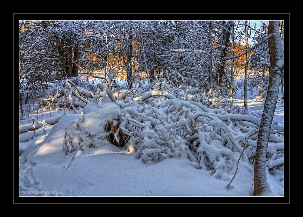 Pile of brush by greyrose