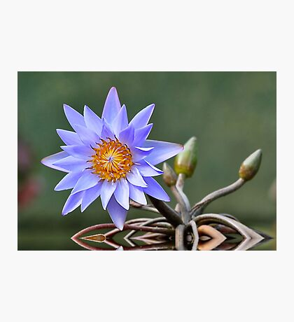 Water Lily Reflections Photographic Print