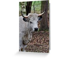 the Cow Greeting Card