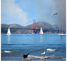 Day at the Bay Photographic Print