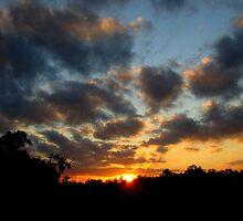 Florida Sunset by Debbie Robbins