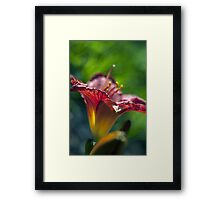 Red Day Lily in a Garden Framed Print