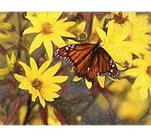 Beautiful Butterfly On Flowers Photographic Print