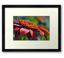 Orange Flower in a Garden Framed Print