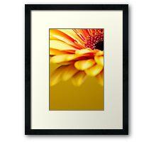 Gerbera 3 Framed Print