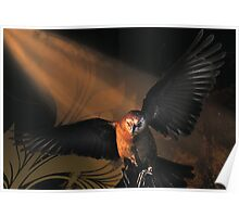 Grackle Coming In Poster
