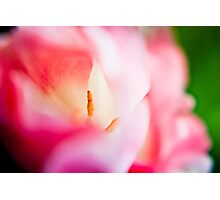 eternal spring Photographic Print
