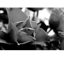 Rose Closeup (B&W) Photographic Print