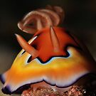 Co's Chromodoris by MattTworkowski