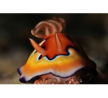 Co's Chromodoris Photographic Print