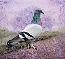 Pigeon in the Park by Bonnie T.  Barry